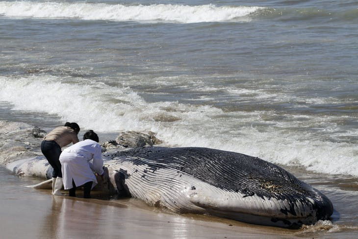 Two women stand near a dead blue whale on the beach in Mazatlan March 20, 2012. The whale was washed up to the shore on Tuesday and scientists of the National Autonomous University of Mexico (UNAM) are investigating the cause of death, according to local media. REUTERS/Stringer (MEXICO - Tags: ANIMALS TPX IMAGES OF THE DAY) - RTR2ZNGY